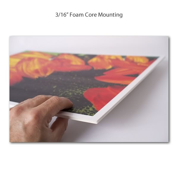 Foam core poster board 24 x 36